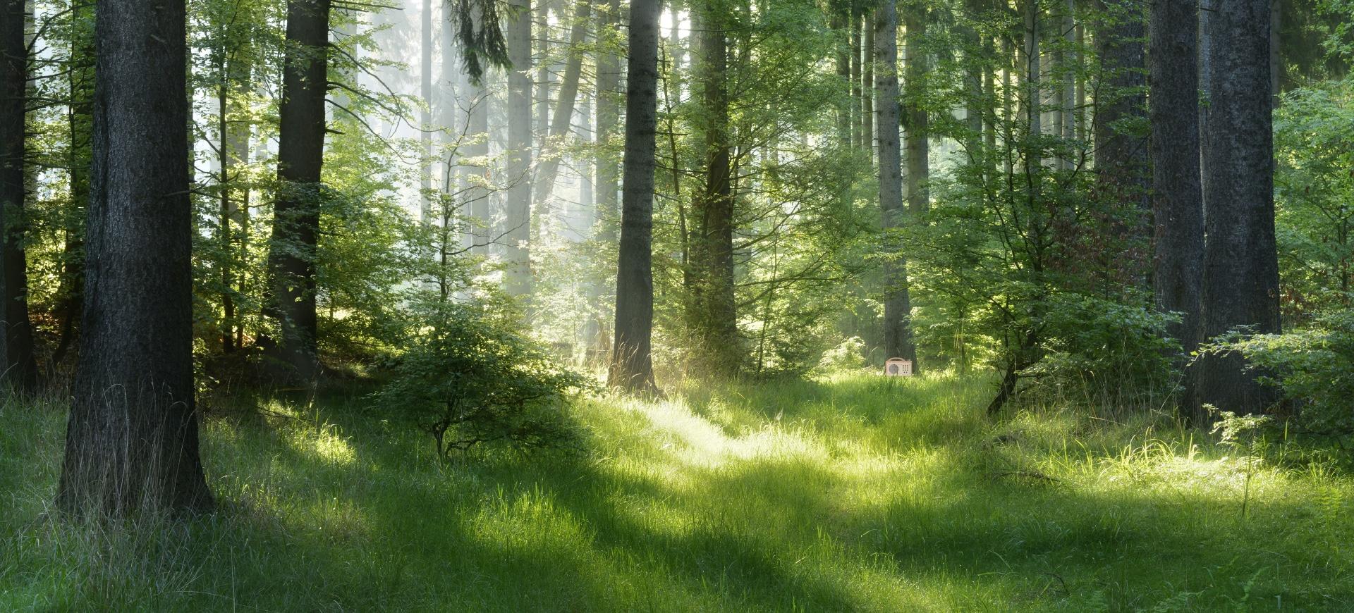 hörbert steht tief im Wald an einem Baum